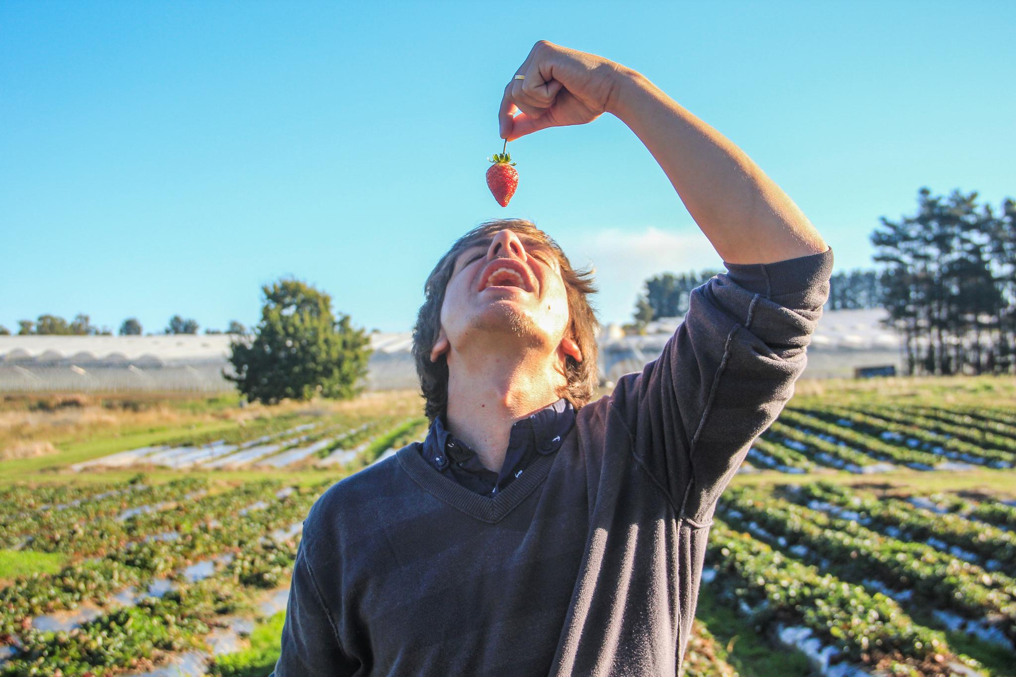 homem comendo morango na fazenda