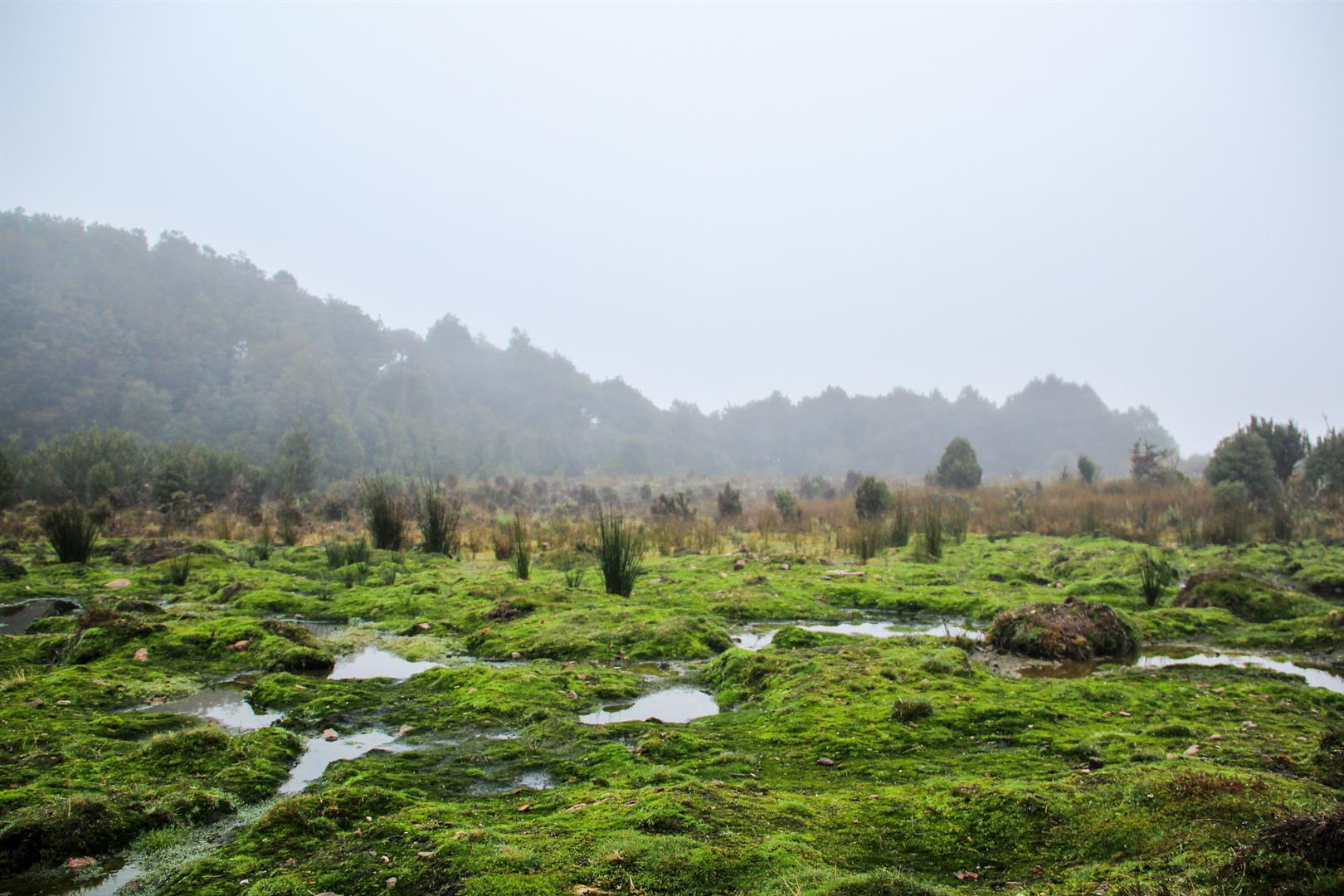 campo cheio de musgo
