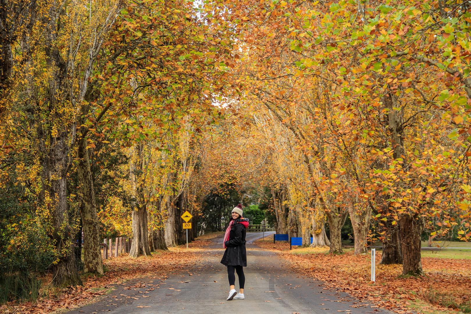 menina com árvores de outono